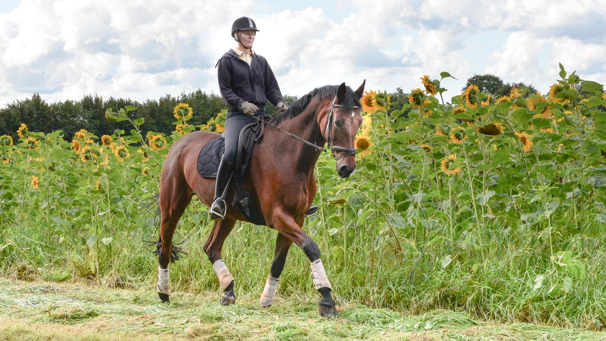 Stephie Bauer Pferde Ausbildung
