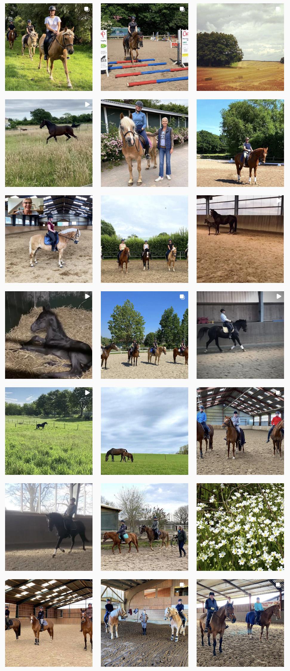 PferdeStephie auf Instagram
